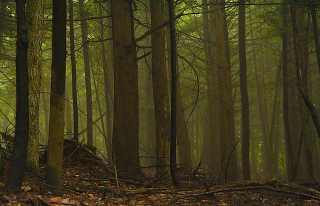 Woods a Foggy Start