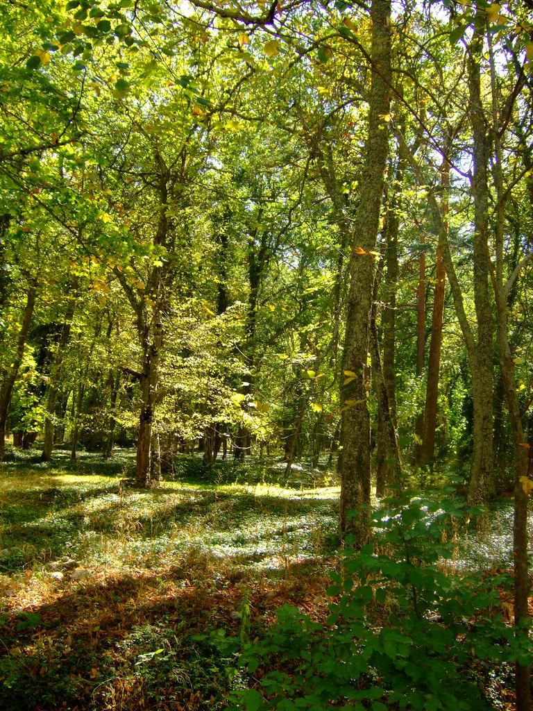 9. Tupido bosque en los jardines. Autor, MarkioM