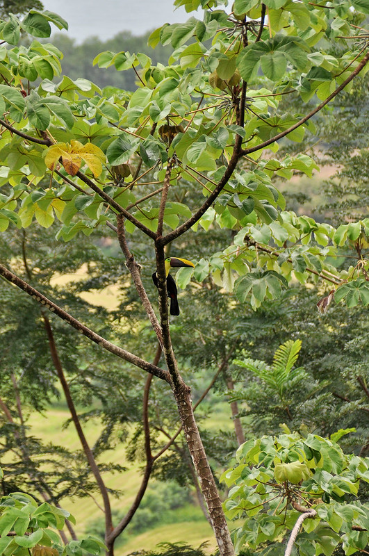 CostaRica 024a