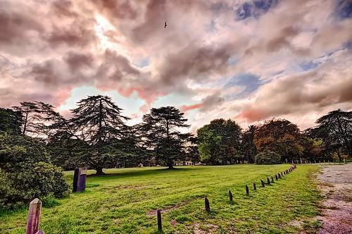 trees bird argentina grass clouds forest day arboles cloudy pasto bosque ave nubes hudson pajaro hdr laplata parquepereyrairaola carancho southerncrestedcaracara