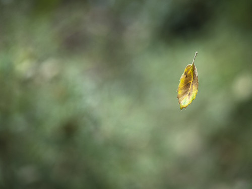 Las primeras pinceladas de otoño