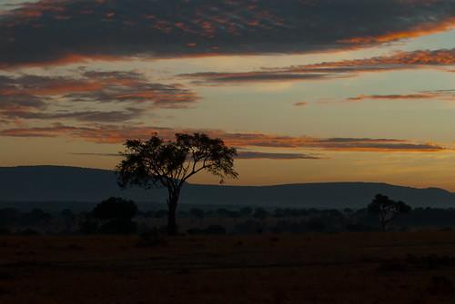africa sunrise afrika bluehour landschaft sonnenaufgang kenia savanna masaimara blauestunde savanne schirmakazie umbrellaacacia