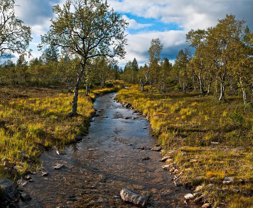 13. Bosque disperso en la tundra finlandesa. Saariselkä. Autor, Mikko kuhna