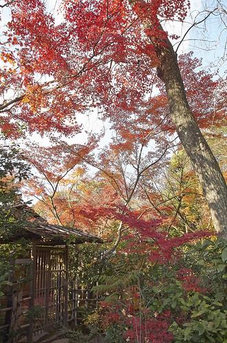【写真】2013 紅葉 : 西行堂/2020-09-05/IMGP4746