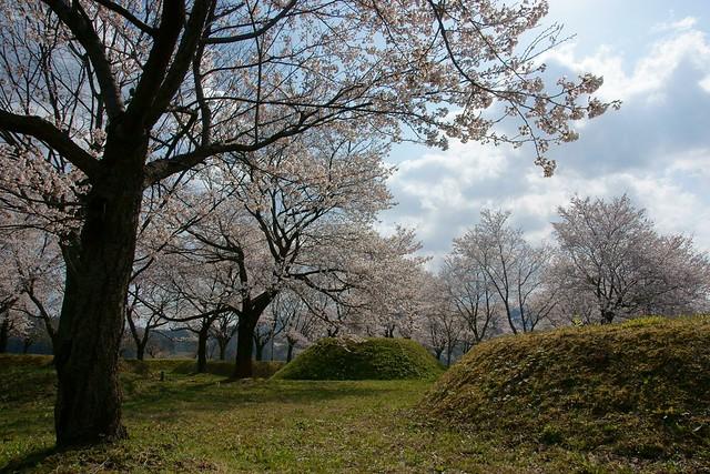 桜科 空科 水科