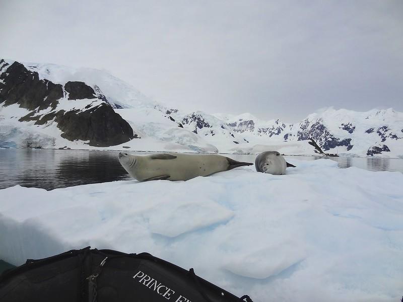 antarctic 3 base brown 115
