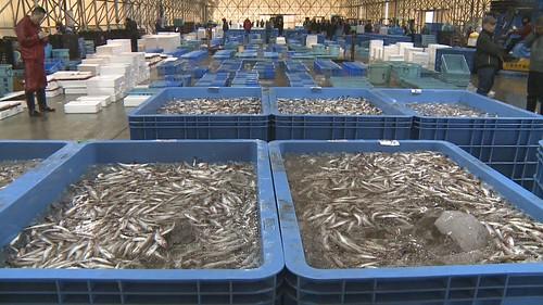 遠洋漁獲又該如何把關?