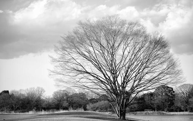 春の雲 / HALU-14
