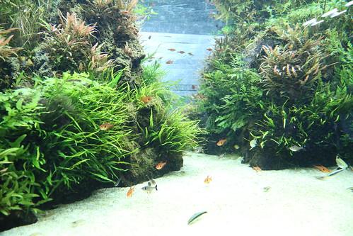 sumida_aquarium04