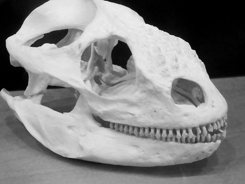 Animal Skull Photo by Sherrie Thai of ShaireProductions.com