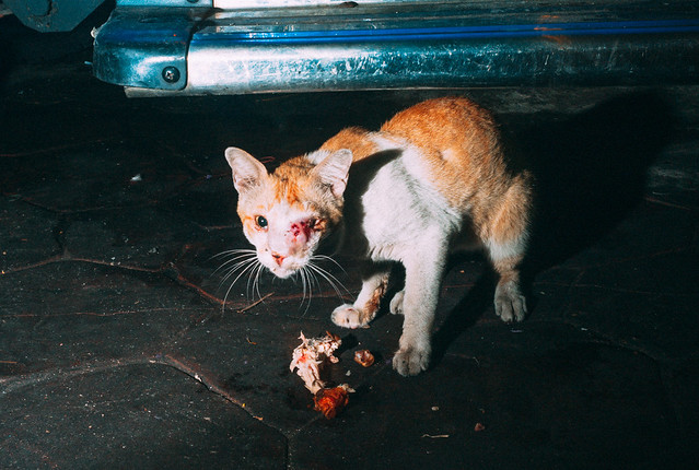 40 Fierce Photos Featuring Felines - Cat Street Photography - injured cat