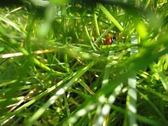 Havering Park - Long Grass