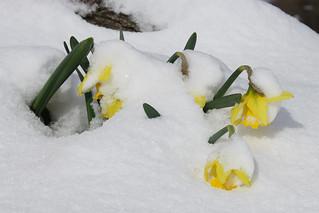 4-15-2014 April snow