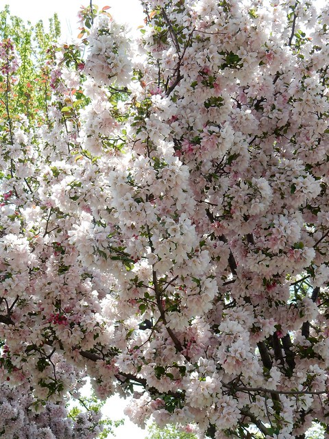 Profusion of Blossoms