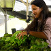 "A beautiful academic partnership is blooming across the Hawaiʻi Community College campus. The agriculture program is providing produce for the campus' culinary program and students on both sides are thrilled.  Learn more: <a href=""http://www.hawaii.edu/news/2017/02/24/powerful-pioneering-ag-to-culinary-partnership-pleases-palates/"" rel=""nofollow"">www.hawaii.edu/news/2017/02/24/powerful-pioneering-ag-to-...</a>"