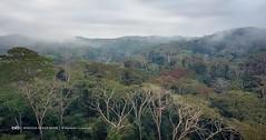 No cacimbo, de manhã cedo o nevoeiro levanta-se lentamente para revelar a impenetrável floresta dos Dembos no Kwanza Norte em Angola - foto via Angola Image Bank © Kostadin Luchansky 2017