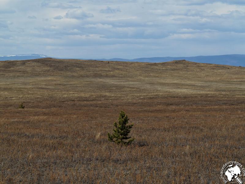 Arbuste isolé dans la steppe