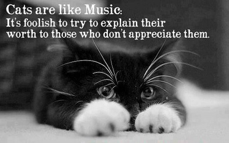 Cats Are Like Music
