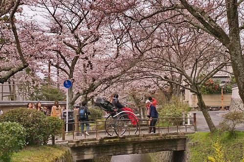 【写真】2013 桜 : 哲学の道/2018-12-24/IMGP9204