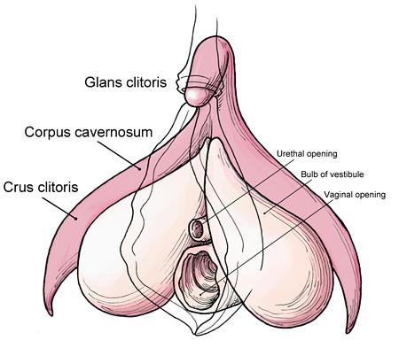 tentang vagina