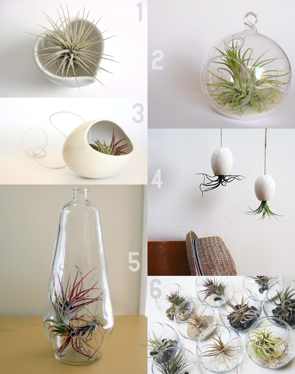I'm completely in love with the new trend for air plants displayed in simpleand beautiful vessels