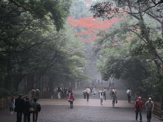 Beautiful Autumn leaves at Yoyogi Park