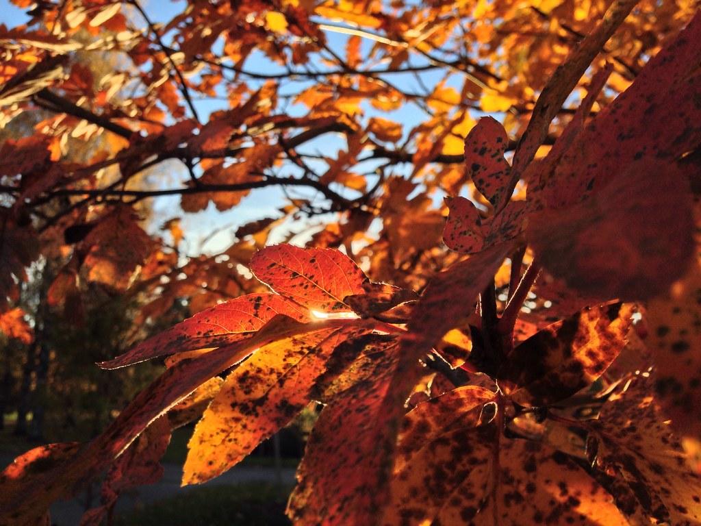 Apparently autumn.