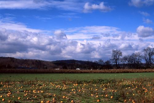 autumn sky ny newyork fall film nature colors clouds 35mm season pumpkin landscape 50mm saturated farm slide upstate land epson positive e6 candor fujichromevelvia50 50mmf18ais nikonn2000 2013 ironkettlefarm catatonk epsonv600 epsonperfectionv600 owegord