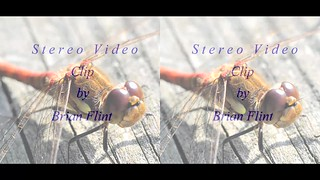 Zoom on common darter - video clip - 3d crossview