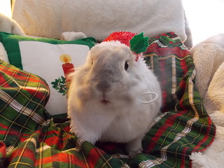 HO HO HO Merry Christmas from Mr. Bun Bun