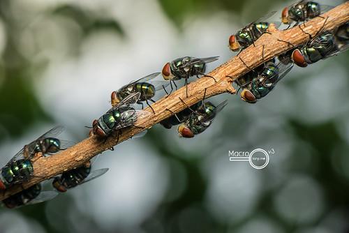 Fly buffet line