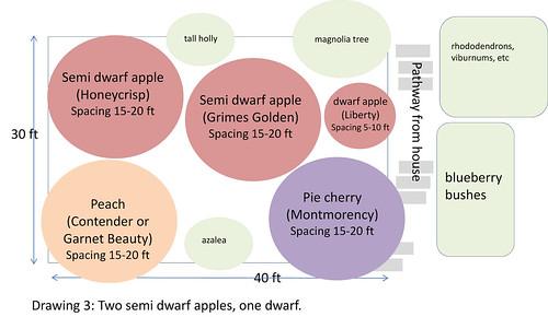 fruit tree planning 3