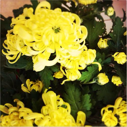 chinese new year, hong kong, celebration, festival, festivities, flowers