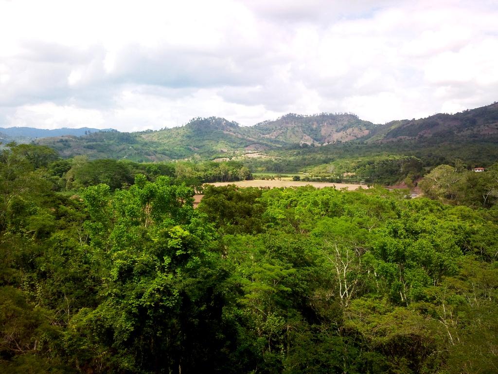 3. Selva tropical cerca de Copán. Autor, Maxid