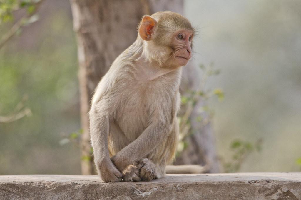 12_01_20141543054438_monkey_face