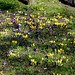 Blackheath RS Already spring flowers!
