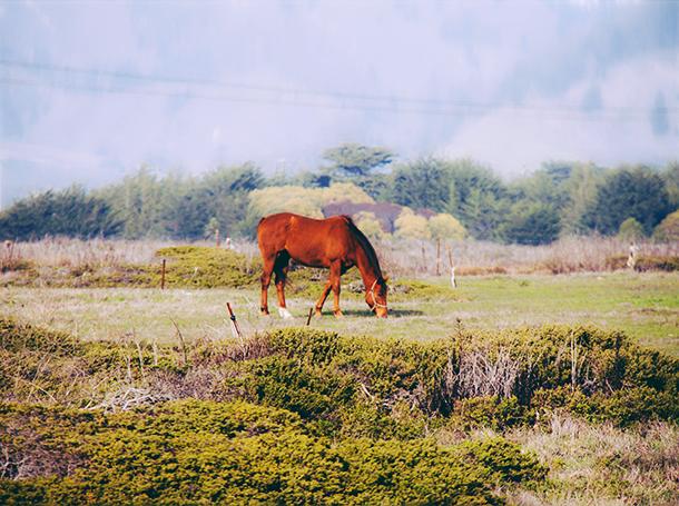 half moon bay hilton, winter beach photos, horse