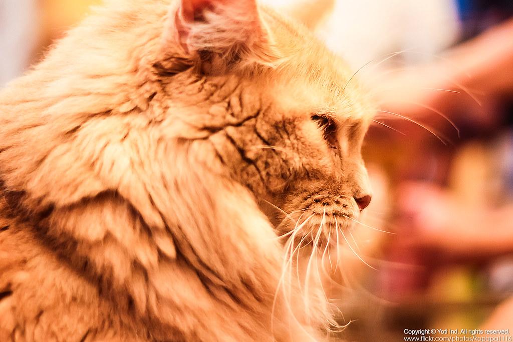元氣貓主題餐廳 IMG_6110