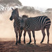 Stripes and Dust by altsaint
