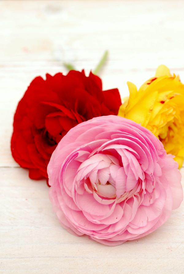 flores 01 600