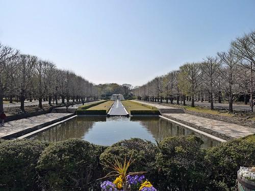 [Sakura 2014] Showa Kinen Park