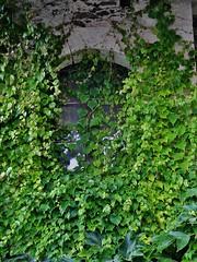 fenêtre à Béhuard