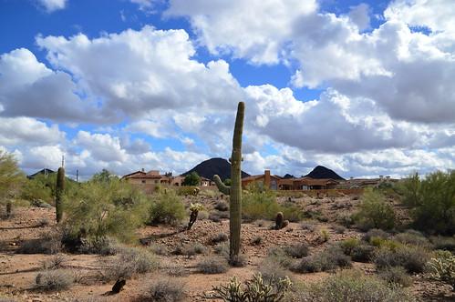 scottsdale az arizona fountain hills fountainpark vacation winter dec december xmas christmas 2016 southwest nature cactus cacti blue skies clouds floral flowers lake lakes landscape west
