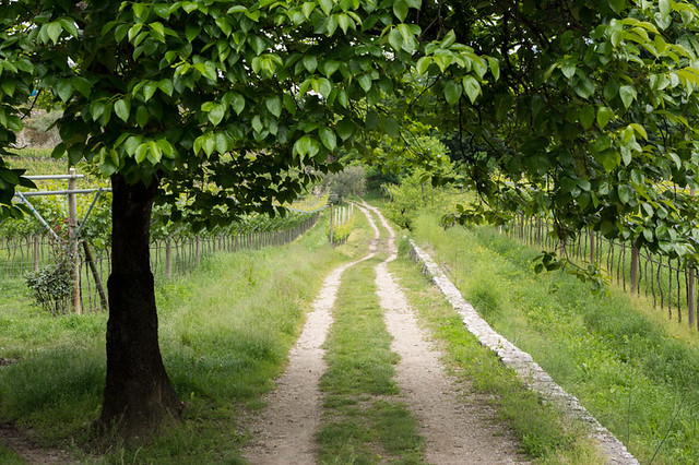 path through green field