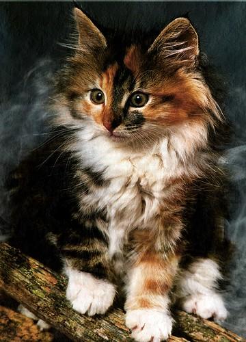 Kitten by 1989juni