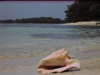Conch, Utila