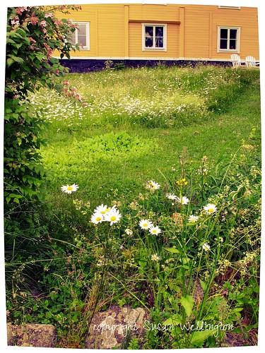 Waxholm summer garden, Sweden by sawelli
