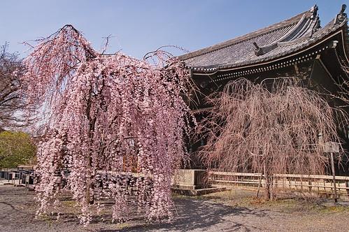 【写真】2013 桜 : 立本寺/2020-10-01/IMGP8673