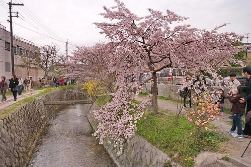 【写真】2013 桜 : 哲学の道/2018-12-24/IMGP9240