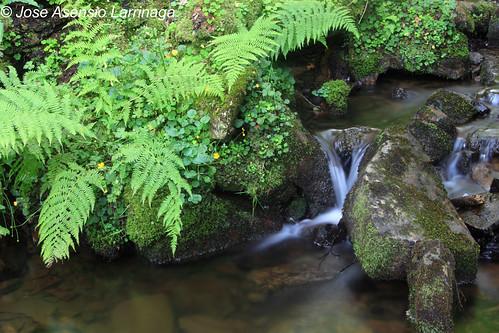 Parque Natural de Gorbeia #DePaseoConLarri #Photography 2